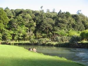 Kauri Coast TOP 10 Holiday Park
