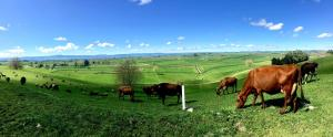 Country Retreat BnB