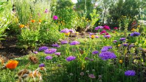 Blooming Delight Tauranga