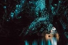 Private Tour: Waitomo Caves Day Trip from Auckland