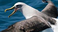 Albatross, Wildlife and Harbour Cruises and Otago Harbour Ferry