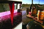 Winery Tour at Ash Ridge