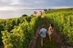 Full-Day Taste the Wines of Marlborough Tour