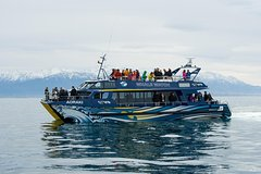 3-Day Kaikoura Whale Watching and Christchurch Tour