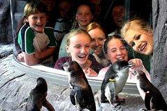 Akaroa Shore Excursion: Banks Peninsula, Christchurch City Tour and the International Antarctic Centre