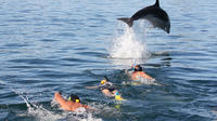Dolphin Discovery in the Bay of Islands