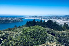 Shore Excursion: Otago Peninsula Scenery and City Highlights Tour