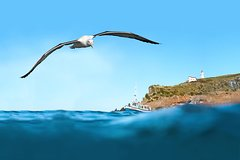 Otago Peninsula Scenic, City Highlights and Wildlife Tour