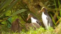 Dunedin and Otago Peninsula Wildlife Tour with Optional Larnach Castle Visit
