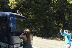 12 Day Ultimate South Island Tour - Private - Fully Guided
