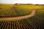 Napier City & Hawke's Bay Wine Country Tour - 5 Hour Private Tour