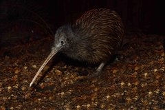 Kiwi Birdlife Park Admission