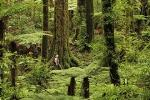 Hike New Zealand's finest forest - Whirinaki forest