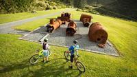 Remutaka Rail Trail Explorer Cycle Tour