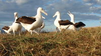 Cruise Ship Excursion Wildlife and Culture tour on the Otago Peninsula